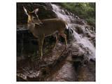 Deer Falls Art by Steve Hunziker