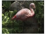 Dark Flamingo Prints by Steve Hunziker
