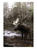Moose Creek Prints by Steve Hunziker