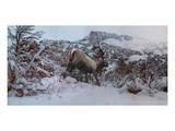 Snowy Elk Poster by Steve Hunziker