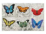Butterfly Mural Posters by Alan Hopfensperger