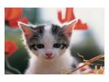 Poppy Kitten Posters