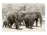 Elephants I Posters por Chris Farrow