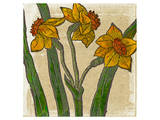 Narcissus or Daffodil Prints