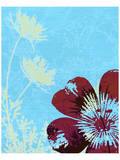 Single Flower and Queen Anne I Prints by Catherine Kohnke