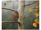 Bluebird Rain Kunstdruck von Chris Vest
