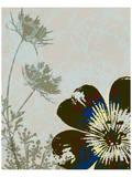 Single Flower and Queen Anne II Prints by Catherine Kohnke