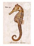 Vintage Seahorse, Hippocampus Hilonis, Sea Horse Poster von Christine Zalewski