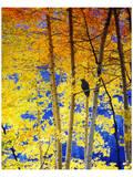 Autumn Raven Kunstdruck von Chris Vest
