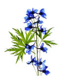 Blue Delphinium Poster af Judy Stalus