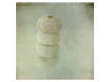 Sea Urchin Kunstdrucke von Judy Stalus