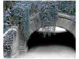 Trefoil Winter Arte por Richard James