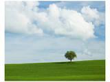 Tuscan Field Tree Poster par Richard Desmarais