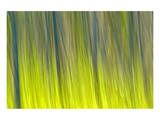 Tree Abstraction VI 高品質プリント : マイク・グランドメゾン