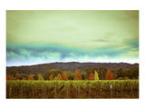 Wine in Time Posters by Ryan Hartson-Weddle