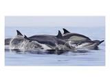 Dolphins at Play Posters av Steve Munch