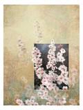 Cherry Blossoms 3 Affischer av Kurt Novak