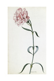 A Painting of a Sprig of Pink Carnation Giclée-tryk af Mary E. Eaton