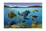 A Turtle Panorama Shows Different Aquatic Species Giclée-tryk af Bralt Bralds