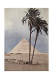 Palm Trees Stands in the Foreground of One of the Pyramids of Giza Lámina fotográfica por Courtellemont, Gervais