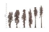 Illustration of Redwood Tree Growth Along the Pacific Coast Giclée-tryk af Robert Van Pelt