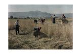 Farmers Take a Break from Working During the Harvest Fotografisk tryk af Hans Hildenbrand