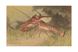 Painting of Two Dueling Crayfish Giclée-tryk af Hashime Murayama