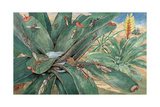Forest-Loving Mosquitoes Lay Eggs in Water-Laden Leaves in Tropics Giclee Print by Hashime Murayama