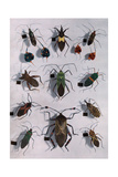 Collection of Assassin and Squash Bugs Photographic Print by Edwin L. Wisherd