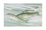 Painting of a Trio of Cutthroat Trout Giclée-tryk af Hashime Murayama