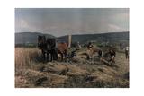 Farmers Cut Grain on the Swabian Alb Fotografisk tryk af Hans Hildenbrand