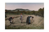 Three Women Cut, Bind and Gather Sheaves in a Field During Harvest Photographic Print by Hans Hildenbrand
