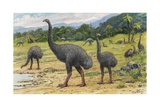 Man's Arrival on New Zealand May Have Caused the Extinction of Moas Giclée-tryk af Charles R. Knight