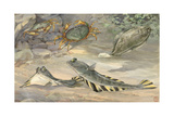 Starry Flounders and a Mottled Sand Dab Swim Near a Pair of Crabs Giclee Print by Hashime Murayama