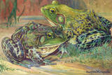 These Bullfrogs Stay Close to Water Giclee Print by Hashime Murayama