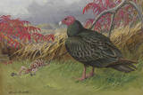 Painting of a Turkey Vulture Standing Beside a Skeleton Giclee Print by Allan Brooks