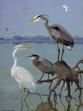 Great White and Blue Herons Perch on a Tree Trunk in Shallow Waters Reproduction procédé giclée par Allan Brooks