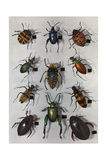 Collection of Various Beetles Photographic Print by Edwin L. Wisherd