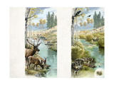 A before and after of Yellowstone's Habitat with and Without Wolves Lámina giclée por Fernando G. Baptista