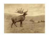 A Painting of an Irish Elk of the Pleistocene Era Giclée-tryk af Charles R. Knight