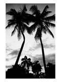 Palm Tree Silhouettes, Naples, Florida Poster