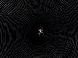 An Orb Weaver Spider in its Web Fotografie-Druck von Amy White and Al Petteway
