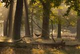 A Western Jackdaw, Corvus Monedula, Lands in Misty Forest in Autumn Impressão fotográfica por Alex Saberi