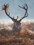A Red Stag Adorns Himself with Foliage on a Winter Morning in Richmond Park Impressão fotográfica por Alex Saberi