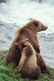A Grizzly Bear Cub Nuzzles its Mother by a Waterfall Fotografisk tryk af Tom Murphy