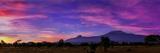 Colorful Clouds at Dawn over Mount Kilimanjaro. the Main Peak Is Kibo; the Smaller Peak Is Mawenzi Fotografisk tryk af Babak Tafreshi