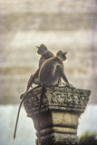 Gray or Hanuman Langurs Rest on Column Capital Near Ruvanveliseya Dagaba Photographic Print by David Hiser