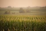 A Non-Irrigated Field of Corn Near Bennet, Nebraska Fotografie-Druck von Joel Sartore