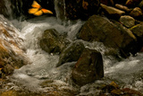 A Lone Monarch Flies over a Mountain Stream in Michoacan, Mexico Photographic Print by Medford Taylor