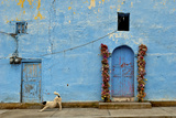The Resident Dog Stretches in Front of a Small Church in Xoconusco, Mexico Fotografisk tryk af Medford Taylor